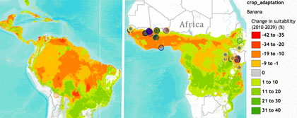 Banana suitability changes in Latin America and Africa. Click to explore this map.