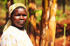 Ruth Marigu Njue explains how erratic weather affects her bean crops, and how she is coping. Photo: P. Casier (CCAFS). Click for more photos.
