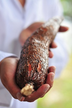 Cassava thrives in the hot and dry conditions predicted for many areas of the wo