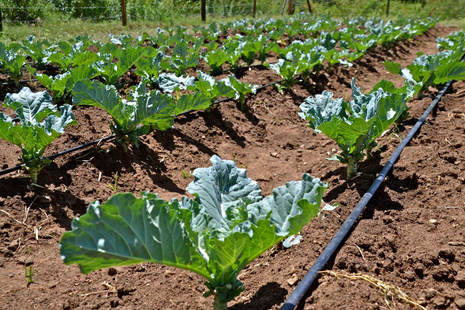permakultúra organikus kert újrahasznosítás természetes trágya