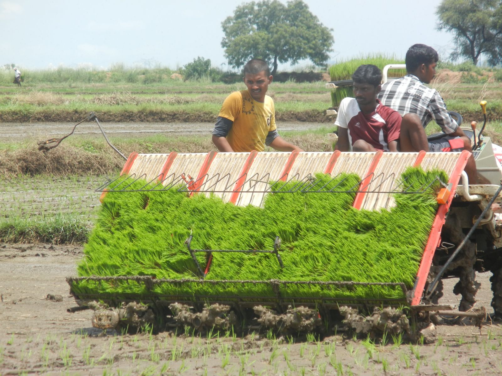 Growing rice with less water: case studies from India ...