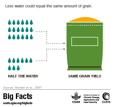 Big facts: Half the water equals same yield