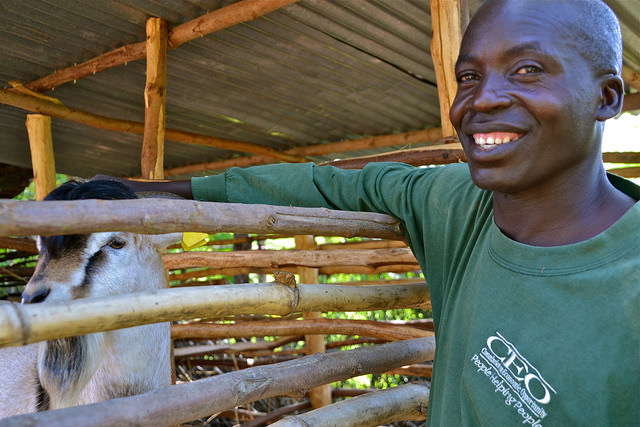 A kenyan climate-Smart farmer keeps milk-producing goats and goats that produce more meat. Photo: C. Schubert (CCAFS).