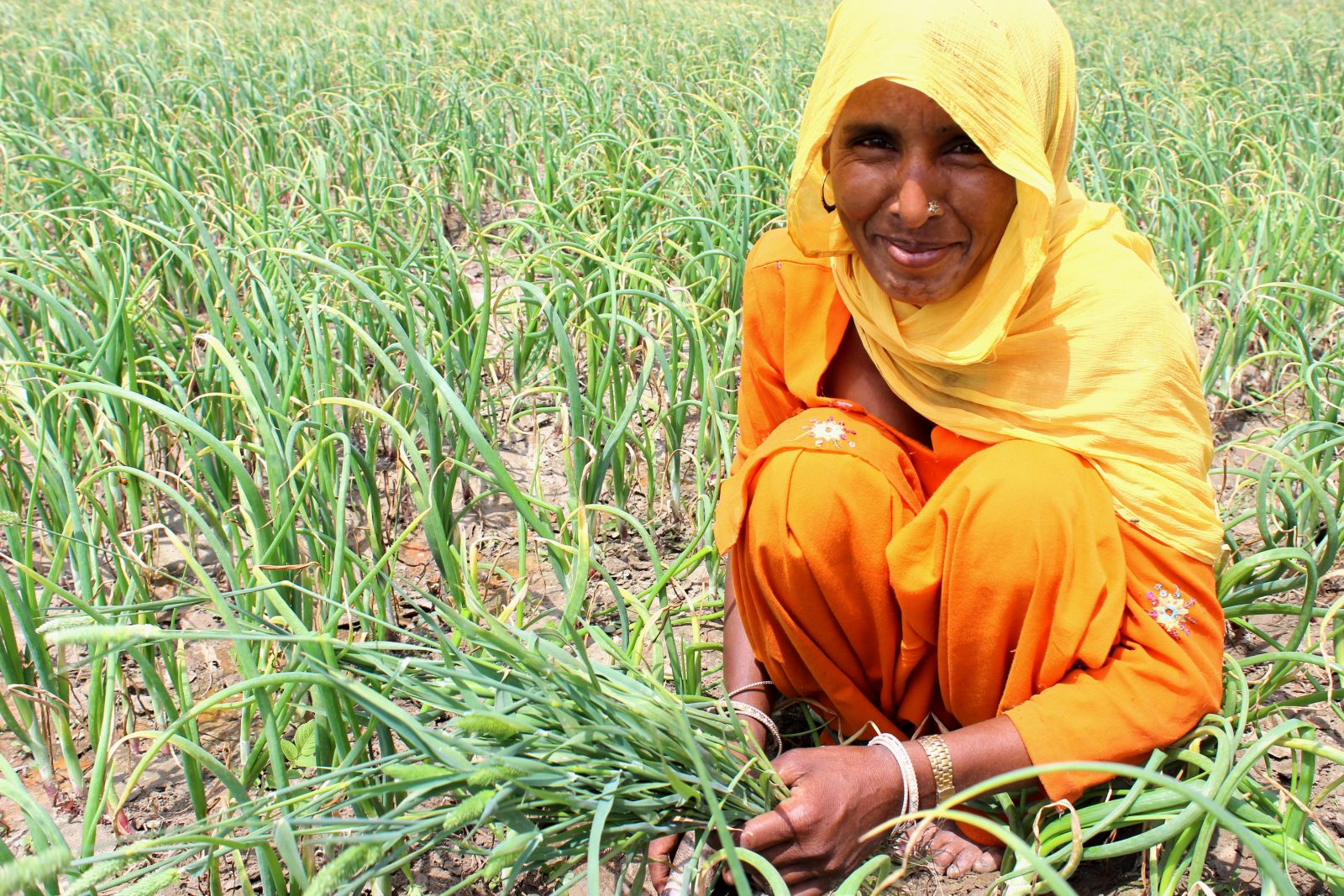 FARMERS CAN PROFIT EVEN AS THEY ADAPT TO CLIMATE CHANGE. PHOTO: DHARINI PARTHASARATHY (CCAFS)