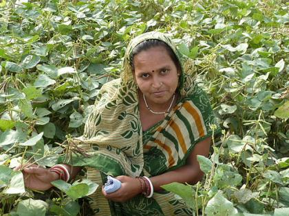 Woman farmer and mung bean