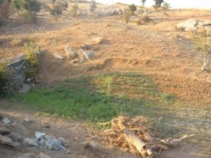 Photo: Conservation of water through communal management of pasture land in Rajasthan