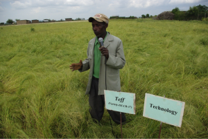 While great strides have been made in understanding climate change and its potential impacts on agriculture, data and tools are critical for designing potential adaption strategies.  Photo Andualem Shimeles (EIAR)