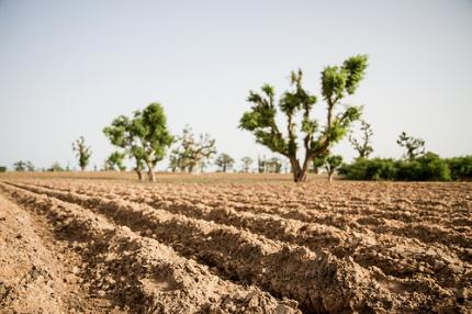 How can farmers contend with drought? Photo: F. Fiondella (IRI)