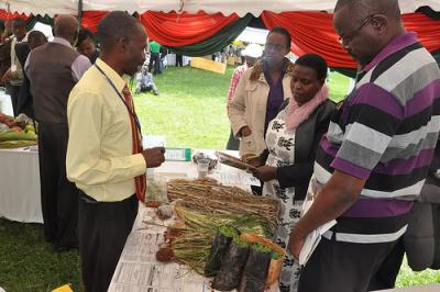 Simon Musila is showing his 'finger millet' innovation to participants. Photo: S. Makau (CCAFS)