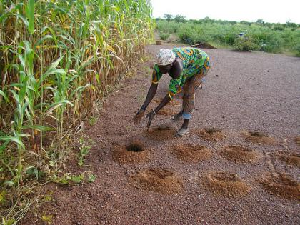 Preparing Zai holes in CCAFS West Africa site in Burkina Faso. Photo: M.Tall (CCAFS WA)