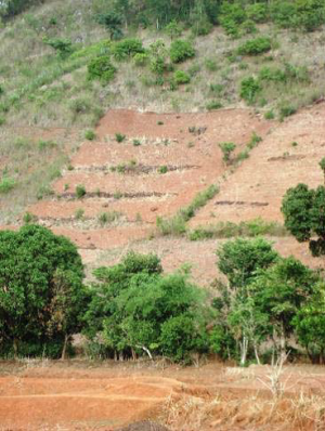 Farmer's fields with tree boundaries in Orissa, India (photo credit: Pade and Akkerman)