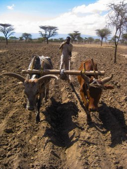Drought related risks and solutions uncovered in new discussion paper on South Asia and East Africa