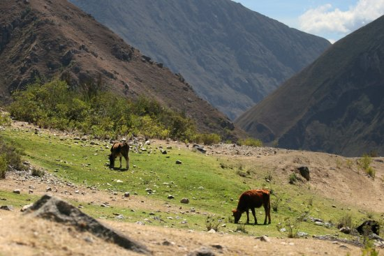 Photo: Women's main income and livelihood, livestock grazing, is threatened by the recent maca-production boom in the Peruvian highlands.