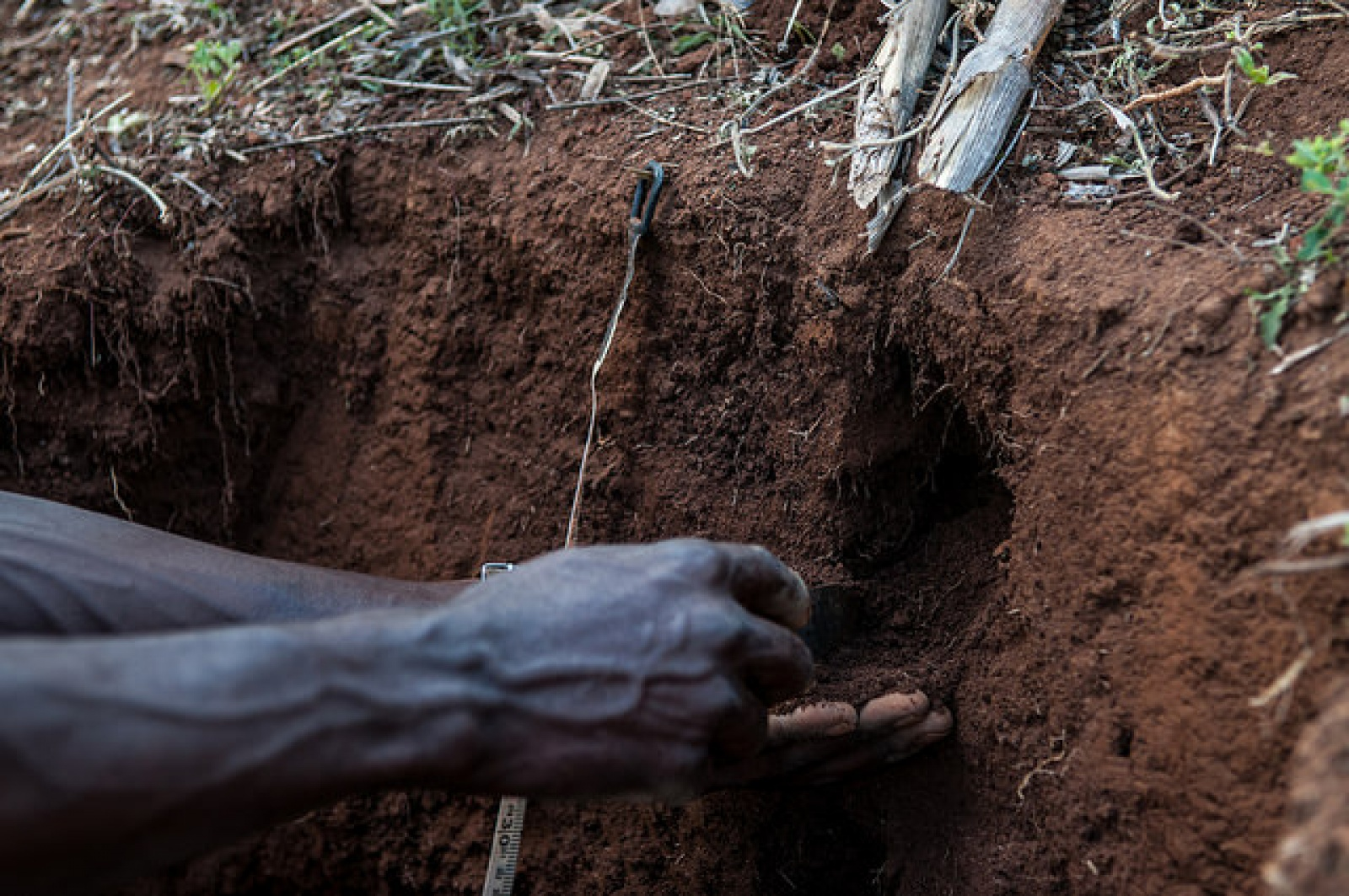 News blog ccafs cgiar research program on climate for 0 4 soil carbon