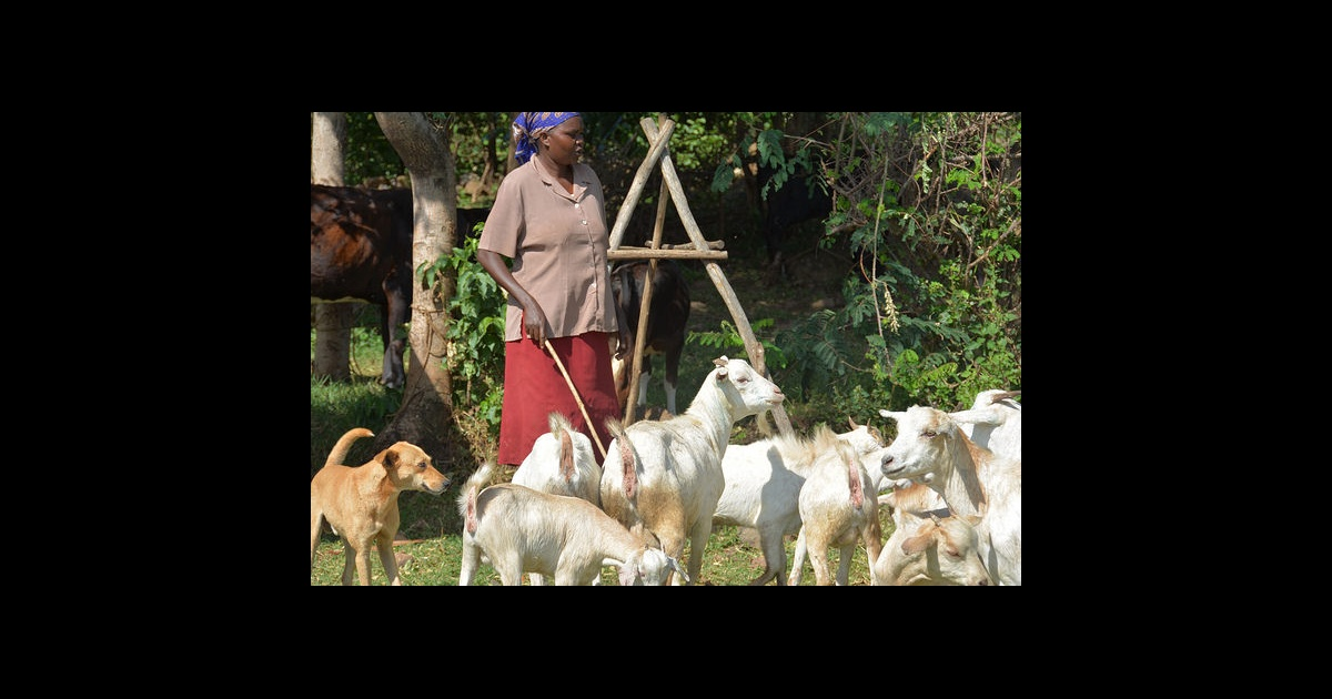 Animal breeding benefits farmers, offers food secure