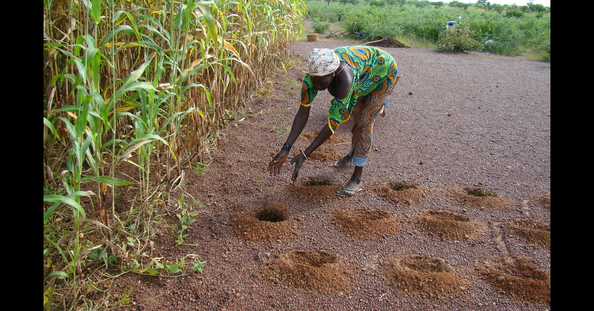 Climate-smart soil, water and nutrient management options in semi-arid West Africa