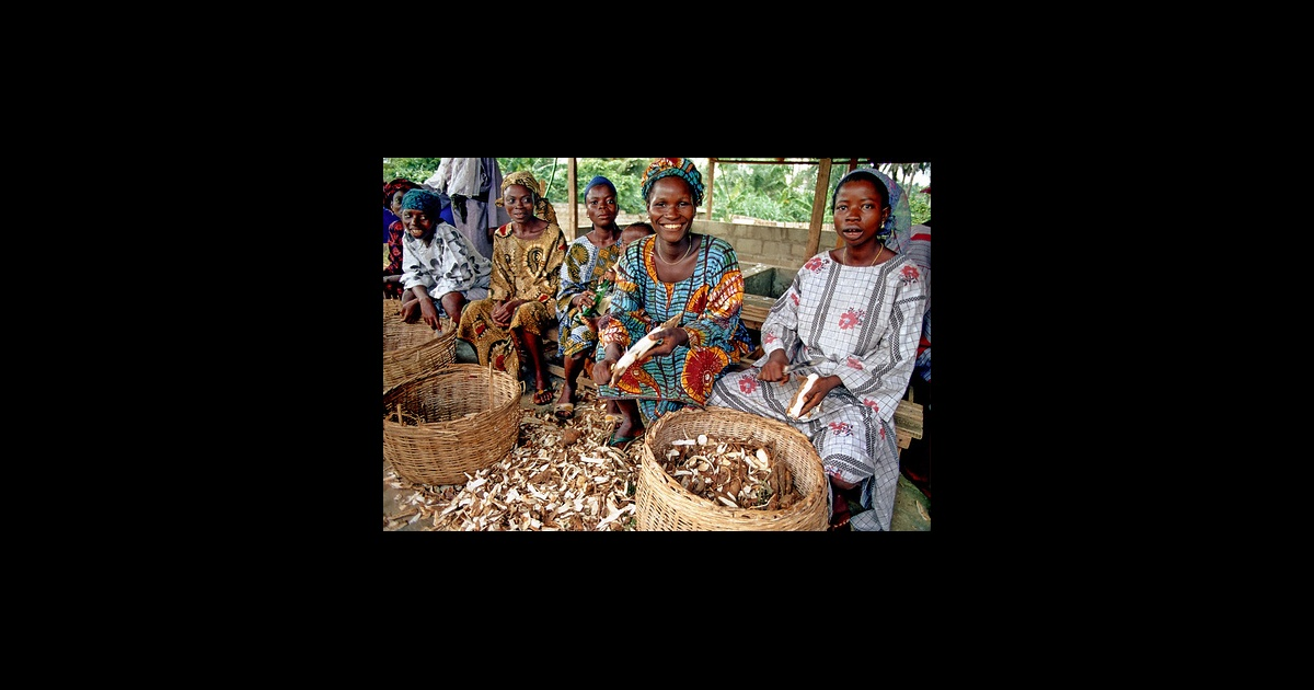 Cassava could prove to be Africa's ticket to food security