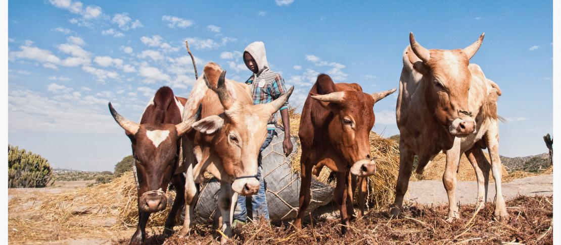 Why Mixed Crop And Livestock Farming Systems Are Central For Future Agriculture Development